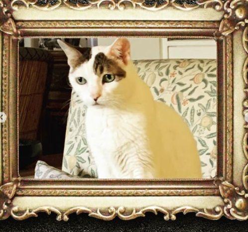 Alia Bhatt Cat no more