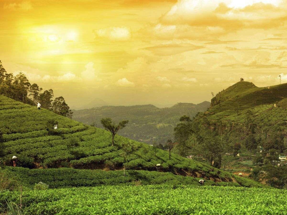 Jorhat tea bungalow