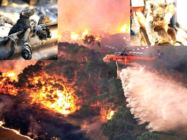 Austrlia Fire: 1 अरब से ज्यादा जानवर जलकर हुए खाक, नहीं बुझ रही ऑस्ट्रेलिया के जंगलों में लगी आग