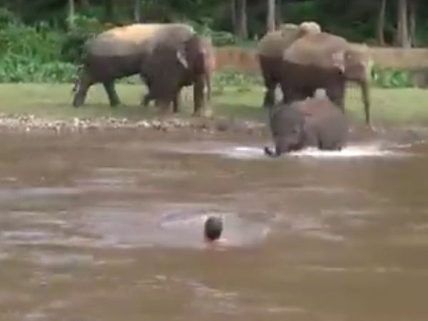 an elephant child rescued a drowning person